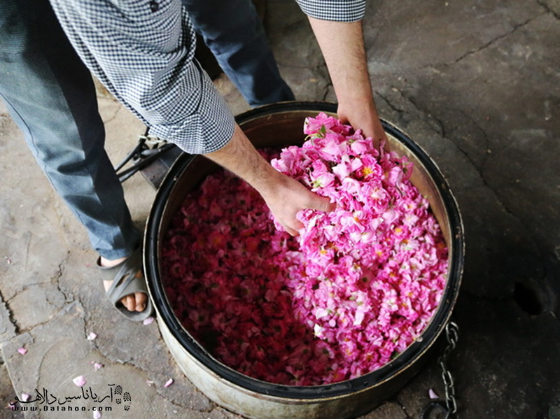 گلاب از تقطیر گل محمدی بهدست میآید.