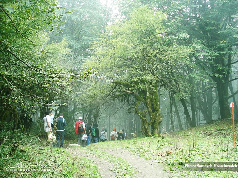 مسیر رویایی سفر به الیمستان از میان جنگلی انبوه