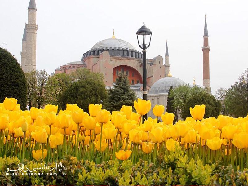 در فستیوال گل لاله استانبول، پارکها و باغهای استانبول پر از جلوه گلهای لاله است.