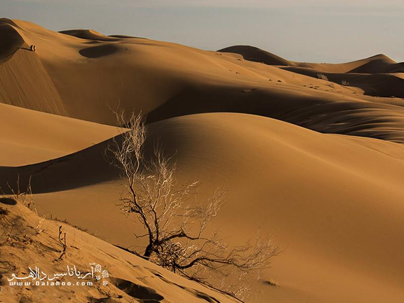 درختچههای گز و تاق، از پوشش گیاهی منطقه مرنجاب.