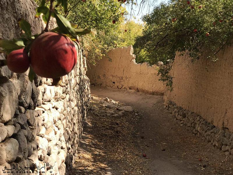 شهر تفت یه دلیل طبیعت منحصربهفرد و باغهای انارش شهرت دارد.