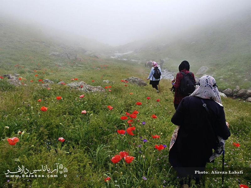 از نئور تا سوباتان و پیادهروی در مسیر مهآلود