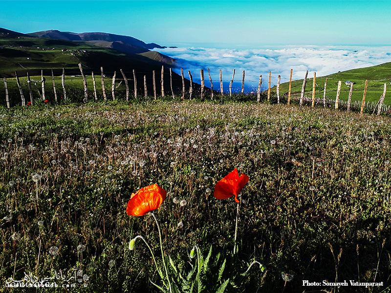 ییلاق زیبای سوباتان در فصل بهار و دشت پر از شقایقها