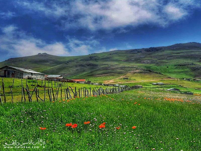 عکس ییلاق سوباتان در فصل بهار وقتی که چمنزار سرسبز است و پوشیده از گل