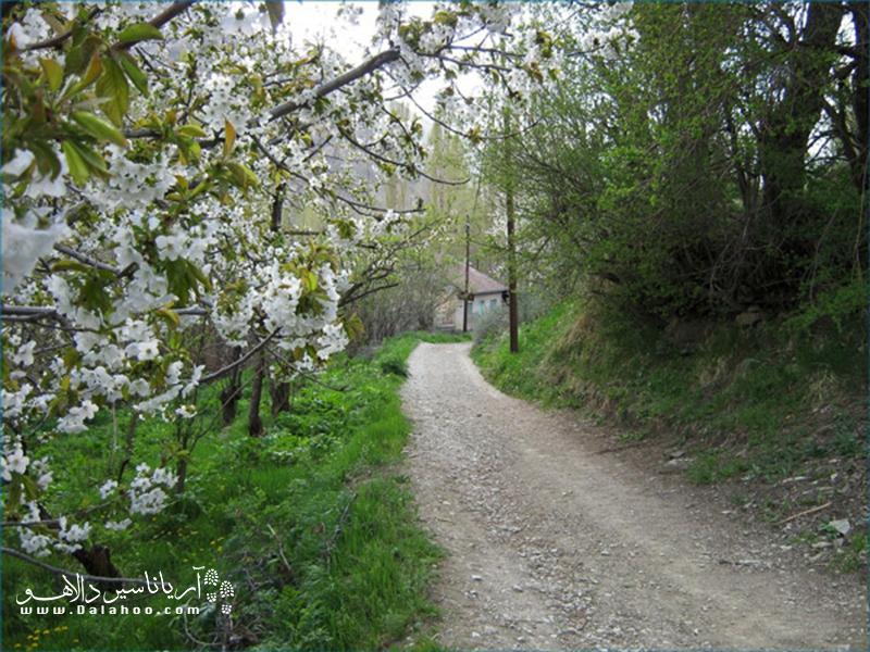 شاید باورتان نشود، روستایی چنین بکر و خوش آب و هوا در نزدیکی شهر شلوغ تهران واقع شده باشد.