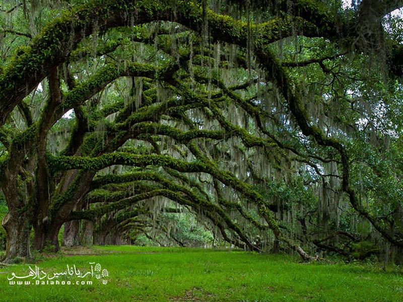 کارولینای جنوبی میزبان خیابانی از درختان بلوط قدیمی است.