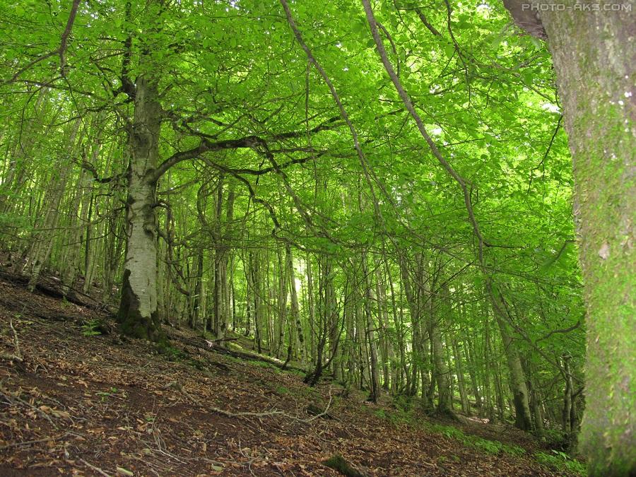 جنگلهای متراکم منطقه دوهزار، با انواع درختان راش، ون، چنار و هیرکانی، در فصول بهار، تابستان و پاییز، سرشار از رنگ میشوند.