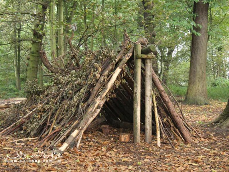 از چوبها و برگ درختها در اطرافتان، سرپناه درست کنید.