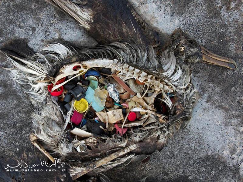 هر ساله چیزی حدود یک میلیون پرنده و 100 هزار موجود دریایی بر اثر خوردن مواد پلاستیکی از بین میروند.