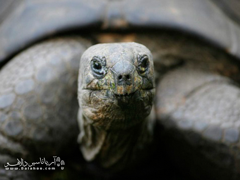 گونههای در حال انقراض تکرار نخواهند شد.