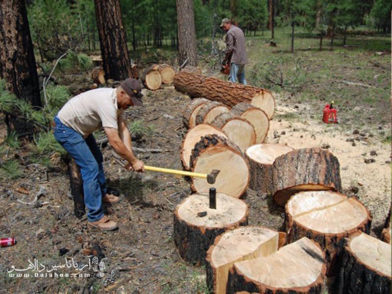قطع درختان به طور مستقیم زندگی ما را در خطر قرار میدهد.