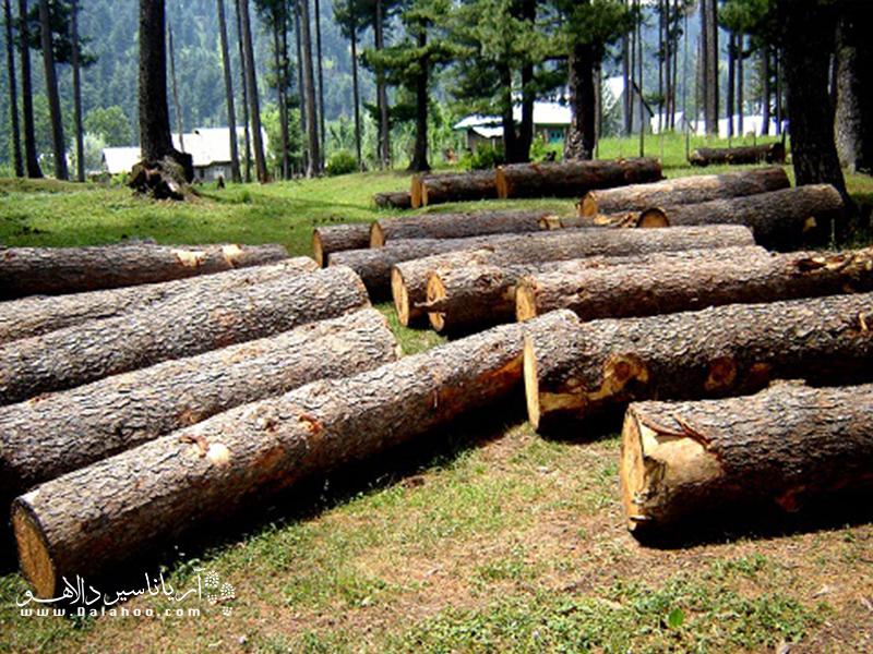 برای حفظ جان درختان، در مصرف کاغذ صرفه جویی کنیم.