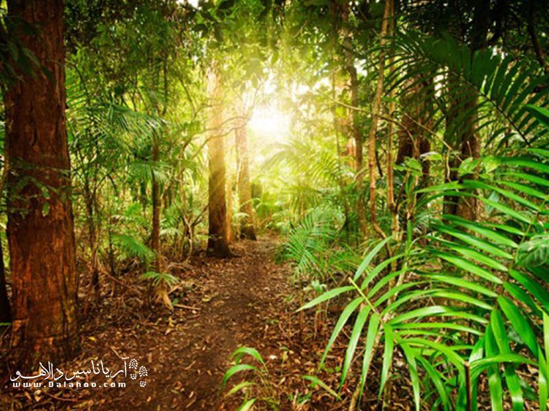 پوشش گیاهی متنوع در سراسر جهان، میراث جهانی است.