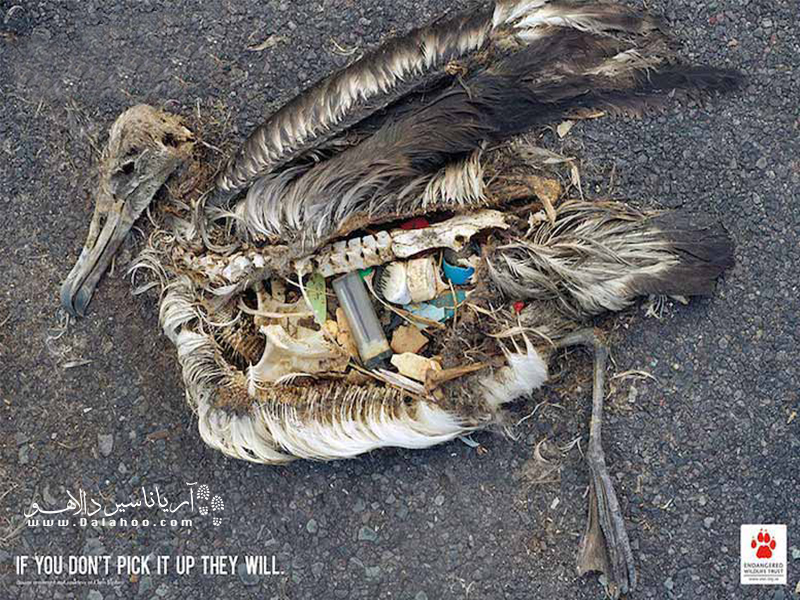 شما آشغالهایتان رو جمع نکنید، هستند حیواناتی که جمع کنند!
