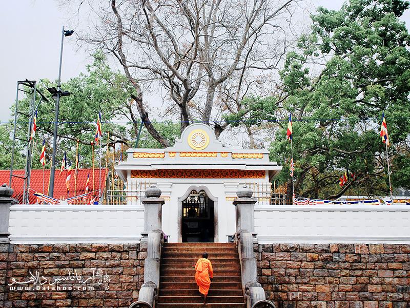 در مرکز این منطقه یکی از قدیمیترین درختهای جهان قرار دارد. نام آن سری ماها بودا (Sri Maha Bodhi) است.