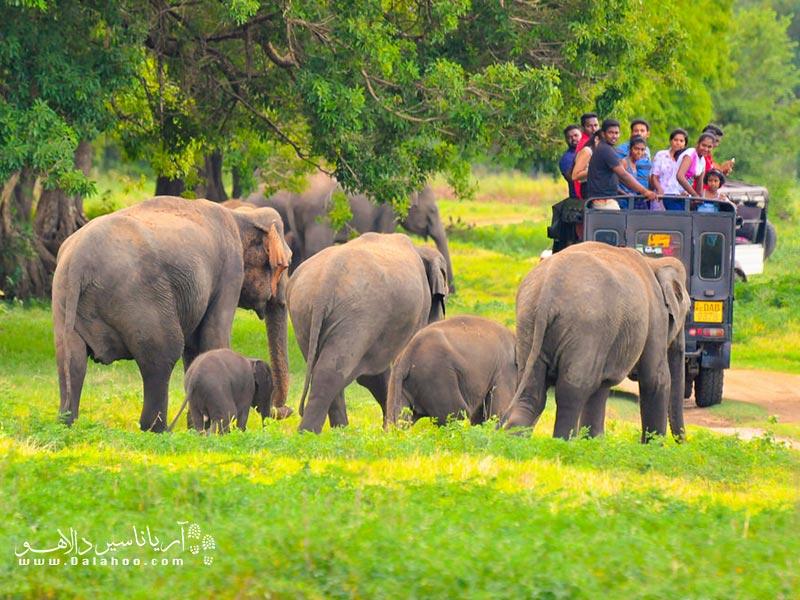 شاید سریلانکا جزیره کوچکی باشد اما حیوانات آن بزرگاند.