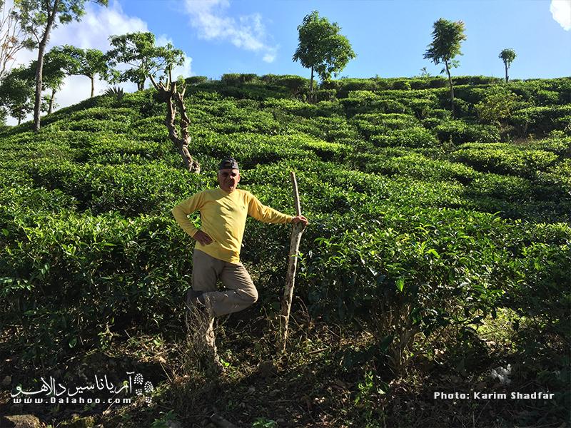 مزارع چای سریلانکا، یکی از جاذبههای پرطرفدار این کشور در میان گردشگران است.