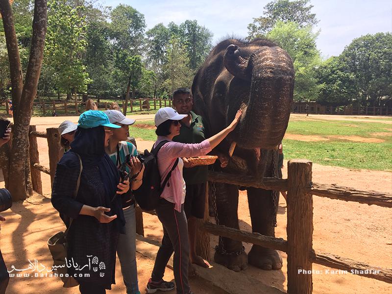 تا به حال لذت غذا دادن به فیلها را تجربه کردهاید؟ حتما باید از نزدیک این موجودات را موقع خوردن غذا ببینید.