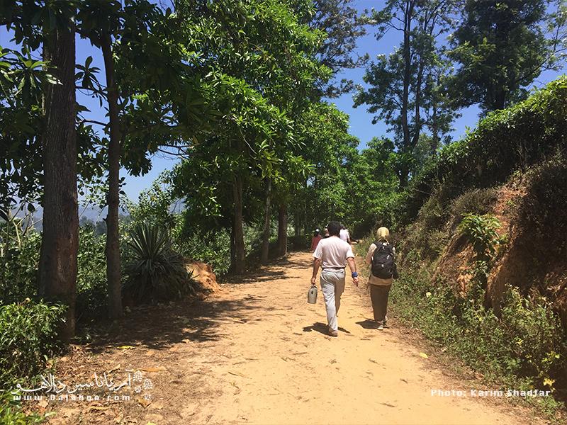 دلایل سفر به سریلانکا میتواند خیلی چیزها باشد اما جذابترینش قدم زدن و تماشای طبیعت بی نظیر و ناب این کشور است.