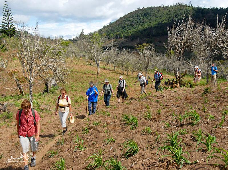 در کوههای یوسامبارا از میان جنگلهای کاج، زمینهای پیچ در پیچ و مناظر دوستداشتنی بگذرید.