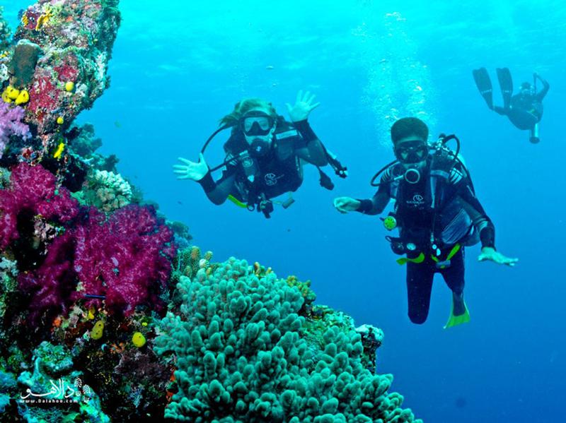 در آبهای اطراف جزیره منِمبا یک اسنورکلینگ عالی را تجربه کنید.