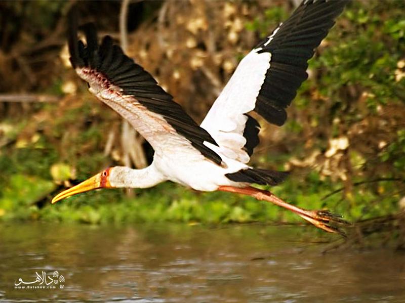 مجموعه جزایر آرام روبندو یکی از مقاصد عالی برای پرندهنگری است