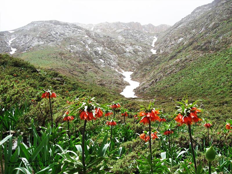 لاله واژگون یکی از آثار طبیعی ملی کشور است.