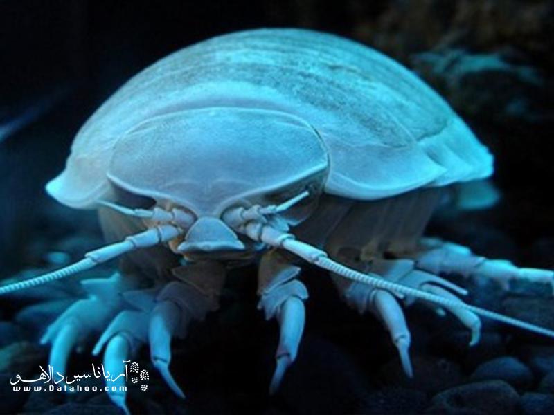 اپیزود جانوری ترسناک در کف اقیانوسهاست.
