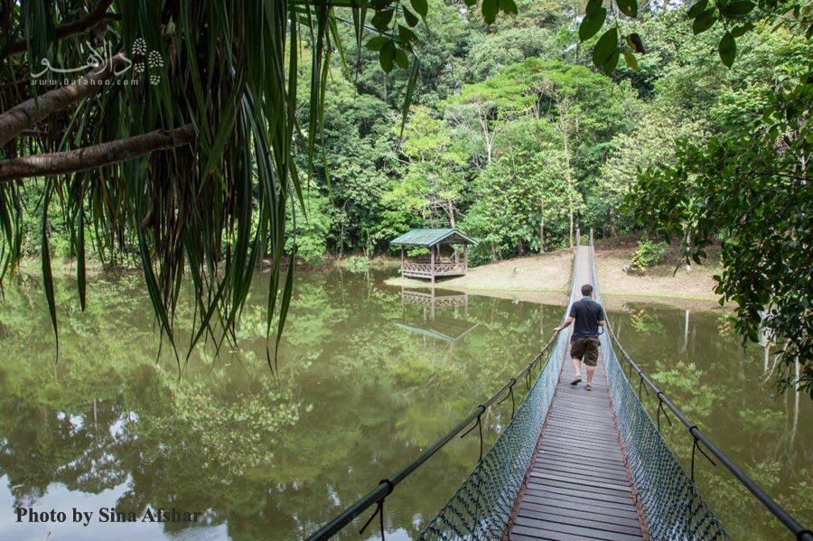 جزیره برونئو