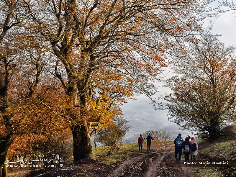 خزان رنگارنگ درختان انجیلی در جنگل نقله بر.