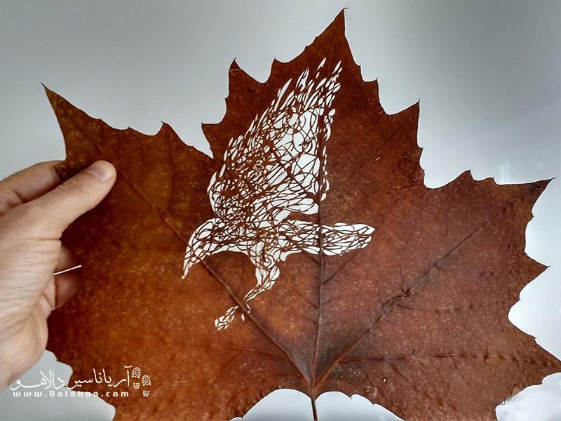 پرندهای روی برگ خشک.
