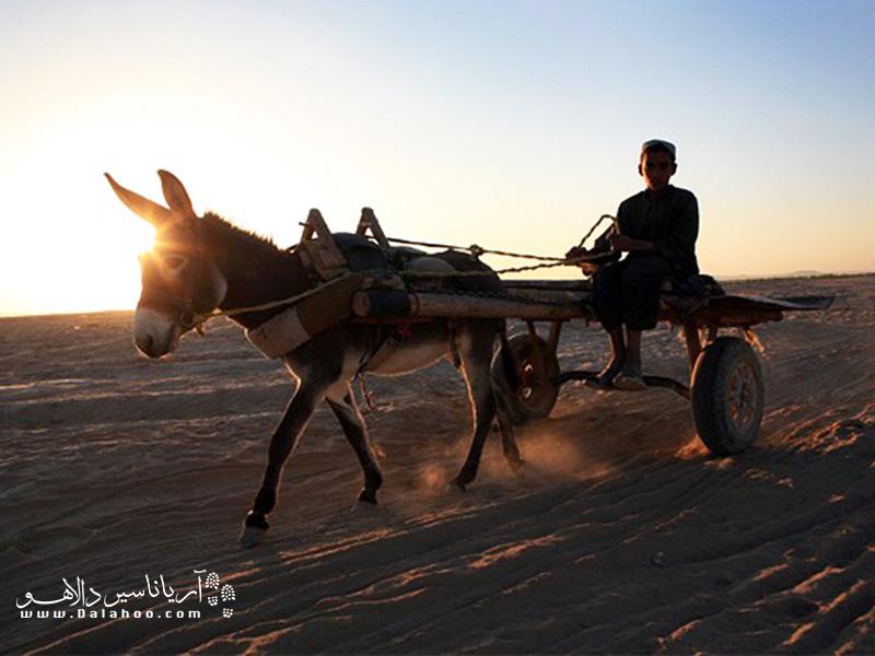 استفاده از این حیوان برای حملونقل در کشورهایی چون افغانستان چیزی حدود ۵ هزار سال سابقه دارد.