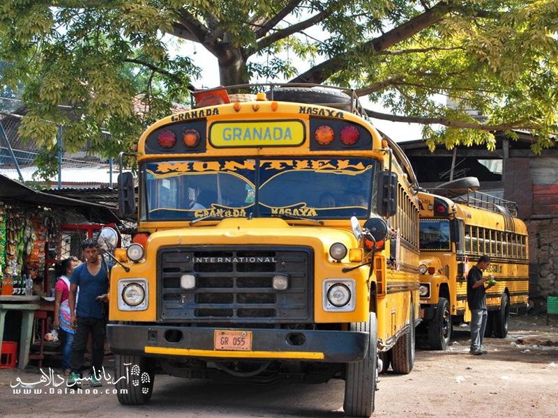 آیا میدانید چرا به این اتوبوسها، اتوبوس مرغی میگویند؟
