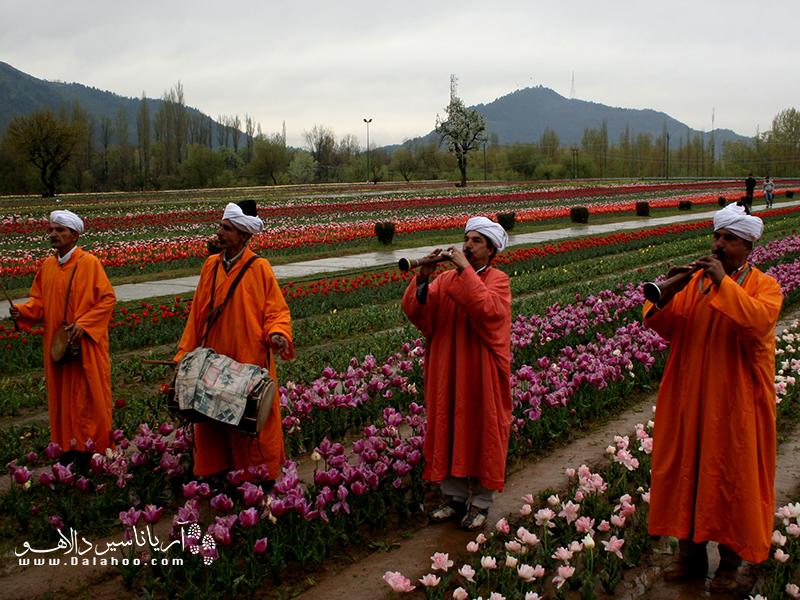 فستیوال گلهای لاله به یاد باغ گل لاله ایندیرا گاندی در سرینگار، کشمیر برگزار میشود.