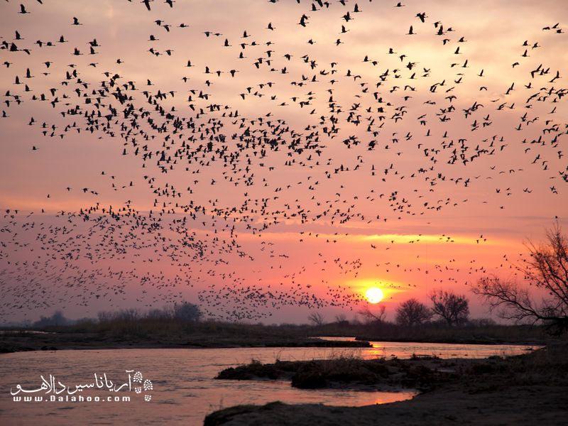 تماشای مهاجرت دستهای از پرندگان هنگام غروب.