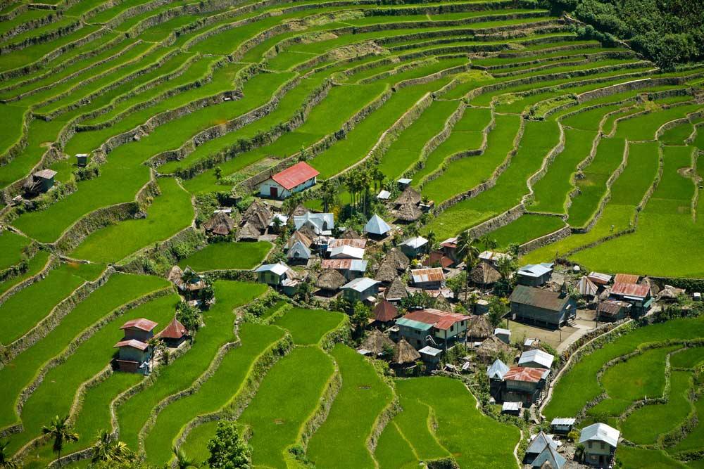 مزارع پلکانی برنج