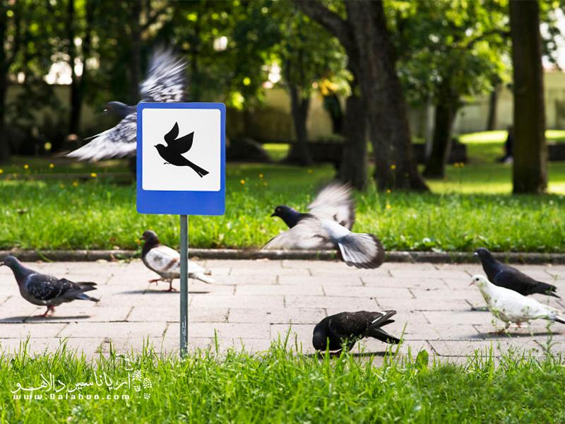 جایی برای پرندهها.