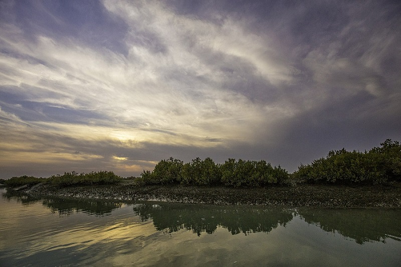 درخت حرا در حقیقت یک کارخانه آب شیرین کن طبیعی و خدادادی است.