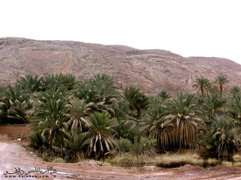 برکه آب و نخلستانهای خرما از جاذبهها طبیعی روستای گرمه هستند.