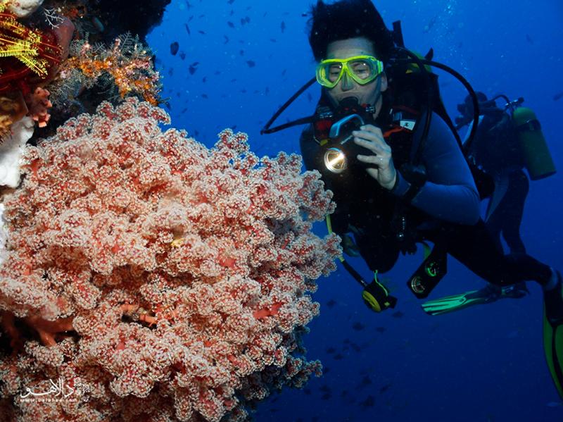 مرجانهای رنگی: از سیاه و سفید تا بنفش تند