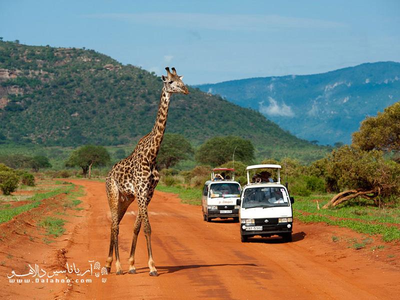 نایروبی به عنوان پایتخت سافاری آفریقا شناخته میشود.