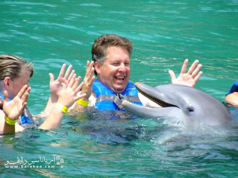 دلفینها بازی با آدمها را دوست دارند و هرچند به شما اجازه نمیدهند که لمسشان کنید اما با شما بازی میکنند.