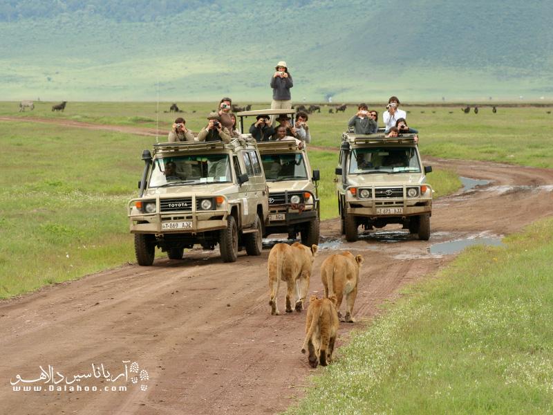 سافاری در پارک ملی ماسای مارا در کنیا