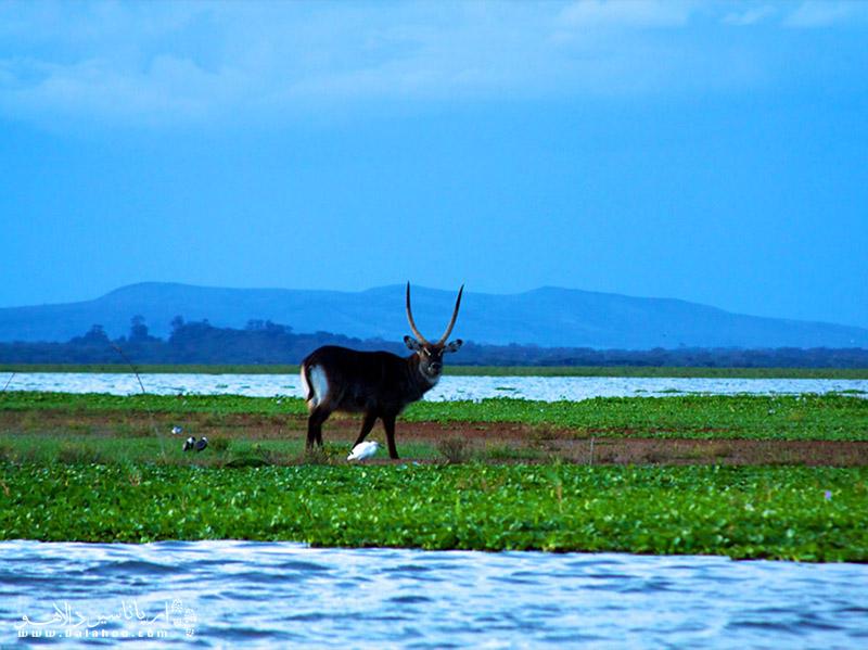 دریاچه نایواشا از نظر جغرافیایی دریاچه در قسمتی از «دره ریفتولی» قرار دارد.