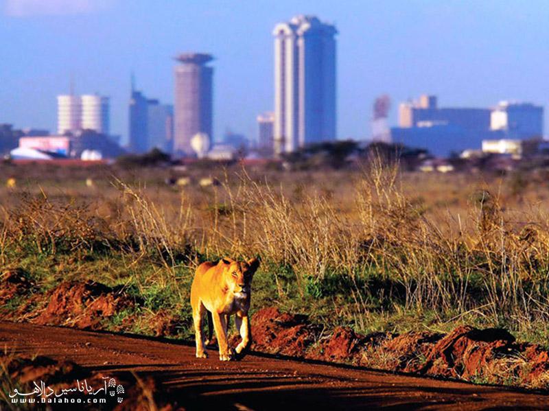 نایروبی پایتخت کنیا در سال 1907 به عنوان پایتخت کنیا اعلام شد.