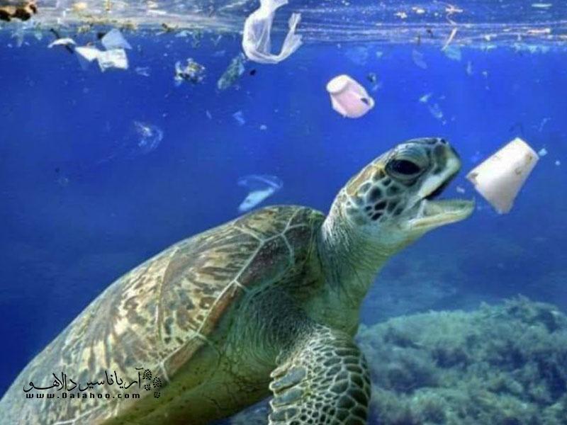هر کدام از زبالههای ما ممکن است روزی در یک گوشه کره زمین جان یک موجود را بگیرید. با استفاده نکردن از ظروف یکبار مصرف جان یک موجود را نجات خواهیم داد.