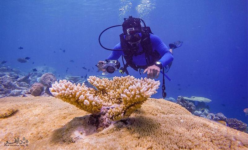 مرجانهای زیر آب در مالدیو
