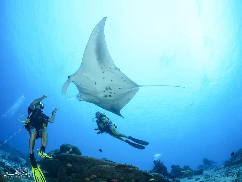 شنا در عمق آبهای مالدیو