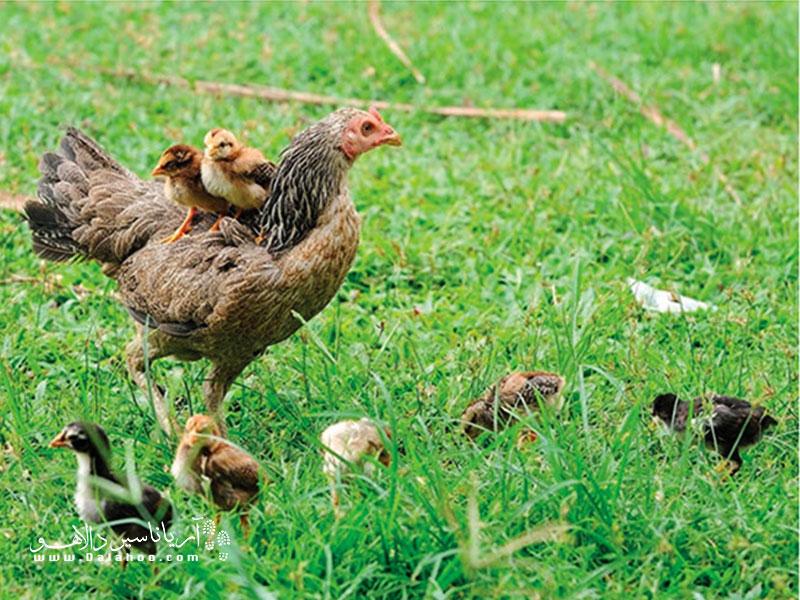 حیوانات هم مثل ما تنها یکبار حق زندگی دارند؛ چرا باید آن یکبار را وعده غذایی ما شوند؟