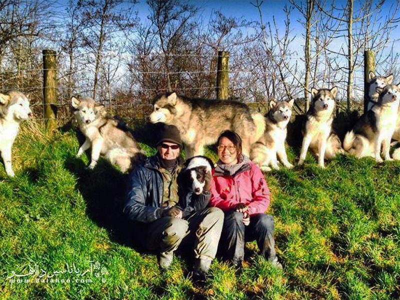 اگر دوست دارید در کنار سگهای مالاموت و در مزرعهای سرسبز کار کنید، پس هلپکس کمکتان میکند.